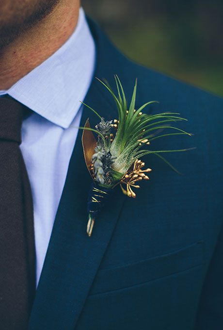 A fresh air plant boutonniere fashioned with gold seeded eucalyptus.  This is the air plant I want in the bouts!!!