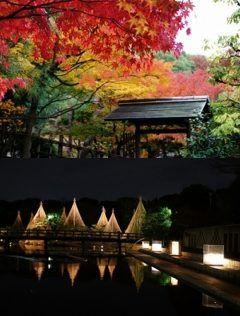 寒くても出かけるとそこにきれいなライトと紅葉が待ってる  外はもうすっかり冬かと思う寒さですが名古屋市熱田区の白鳥庭園は紅葉真っ盛り  いま白鳥庭園は観楓会の真っ最中で12月11日まで開催されてます そして同時開催の11月30日まで開催の紅葉ライトアップが終わるとその明かりは紅葉あかりアートという名のライトアップになります これは美濃和紙あかりアートで照らされるもの 明かりの質が変わるんですね これが12月11日までです  しっかりあったかく着て出かけようね  http://ift.tt/2gEssIj  tags[愛知県]