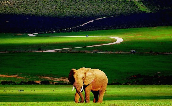 A Lone elephant at Addo National Park, South Africa http://www.mytravelaffairs.com/addo-national-park/