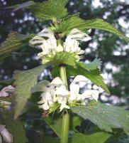 Eetbare bloemen kweken in de eigen tuin is veilig als je geen pesticiden gebruikt andere koop je de eetbare bloemen beter in de groentenwinkel