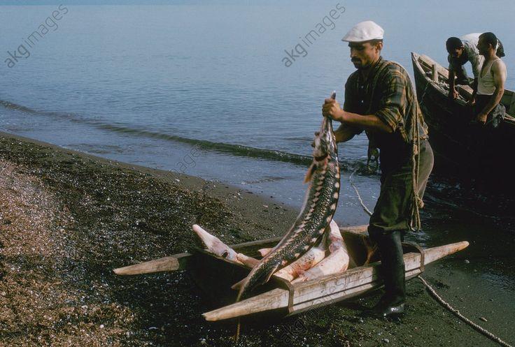 Sturgeon Fishing in the Caspian Sea, Iran / Photo 1964