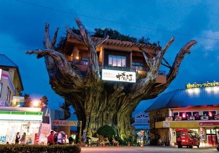 イマドキ女子が大注目!今話題のツリーハウスカフェ5選 | RETRIPがじゅまる(沖縄)