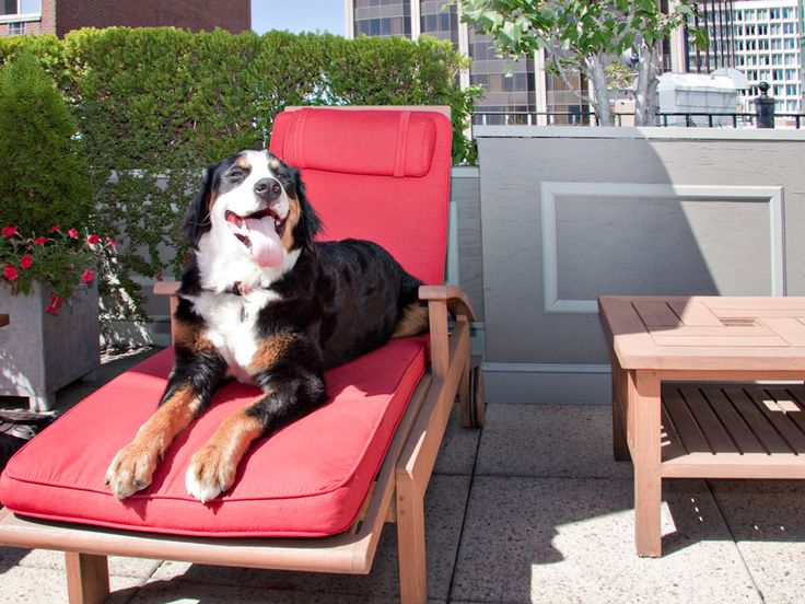 America S Best Pet Friendly Hotels