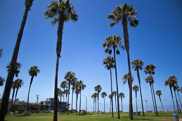 San Diego, La Jolla Beach #california #ontheroad #palms #bluesky #sandiego #lajolla #beach #relax #breathing #usa #pacificocean