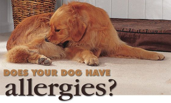 Allergies in Dogs & How to Provide Relief #Dog #Allergy #Relief
