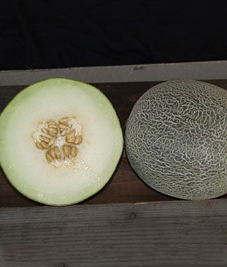 New for 2012 Melon, Galia Regalia Hybrid A delicious cross between a cantaloupe and a honeydew.