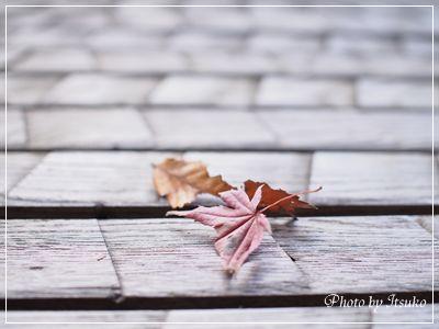 ►秋の可児花フェスタ記念公園