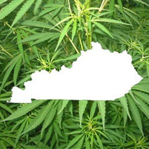Kentucky Governer Steve Beshear sends Obama Administration letter requesting help with hemp!