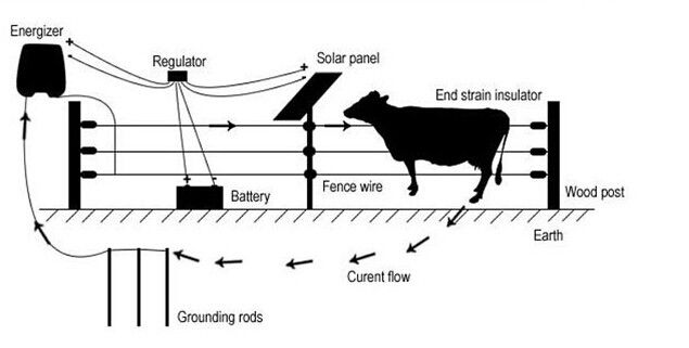 Best 25 Electric Fence Energizer Ideas On Pinterest