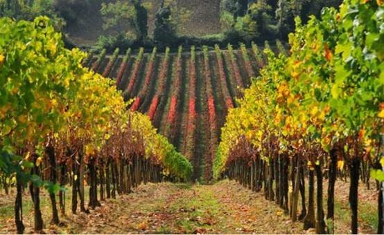 TASTE THE WINE. Il Lambrusco Grasparossa da agricoltura biologica ai Salotti del Gusto dell'Alta Badia. Grazie alla FATTORIA MORETTO