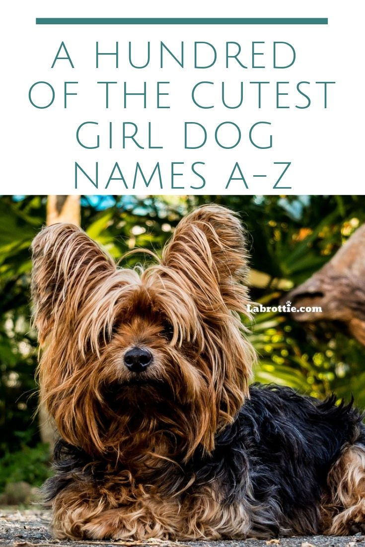300 Girl Dog Names A Z Dog Names Girl Dog Names Dog Names Unique