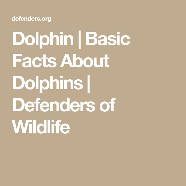 Dolphin | Basic Facts About Dolphins | Defenders of Wildlife
