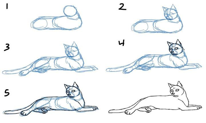 How to Draw Cat fb.me/2yPRnbNtZ