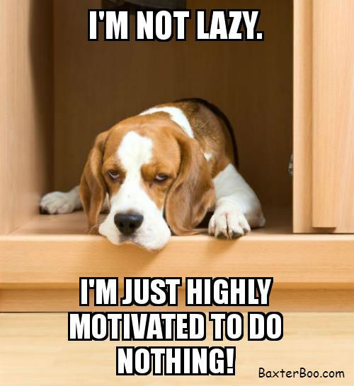 Lazy Beagle is not motivated to do anything.