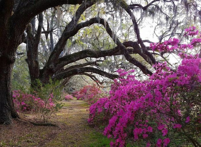 eca94621a57d7d5ff8872b795e3a2ad6 - Magnolia Plantation And Gardens South Carolina