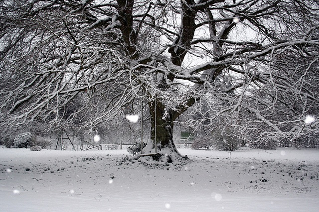 Winter Wonderland by Mary l'antipodeuse