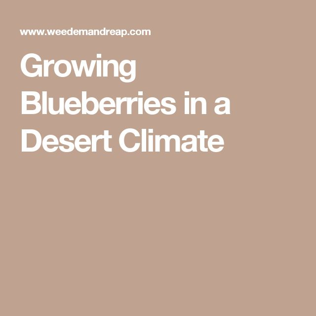 Growing Blueberries in a Desert Climate