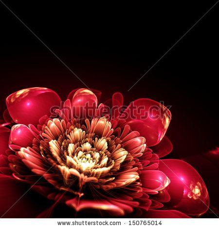 pink fractal flower with golden details on petals, on black background, illustration - stock photo
