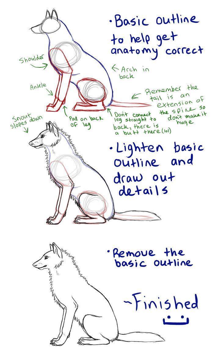 63 best wolf tutorials images on Pinterest | Animal anatomy ...