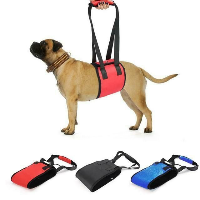 New Pet Dog Harness Handle Support Protection Belt Leash Harnesses