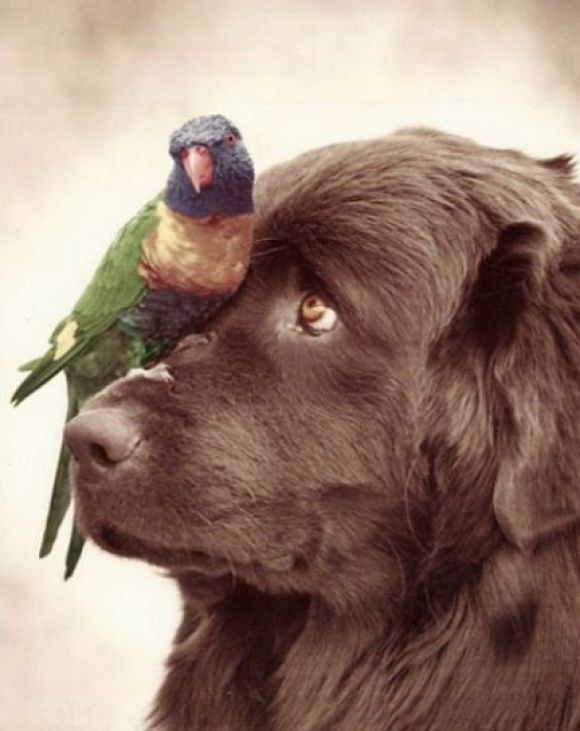 Maybe if I stay REALLY still the bird would just fly away!!!