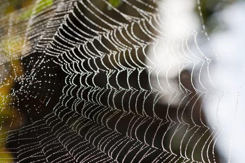 Spider Web | Natural Forms | Pinterest | Google images ...