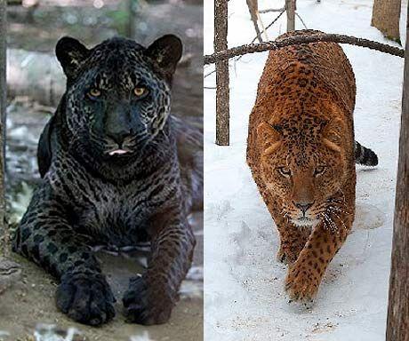 Jaguar Xj220 For Sale >> 17 Best images about jaguar on Pinterest | Jaguar xj220, Coupe and Jaguar type