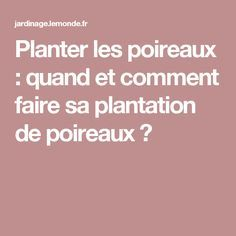 Planter les poireaux : quand et comment faire sa plantation de poireaux ?