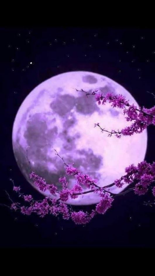 »Moon Photography .. #mond #floral #rosa #baum #Fotografie #schön