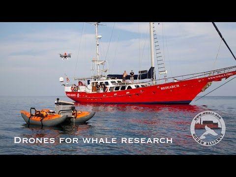 Droni a velryby | SILENT TOUCH - kurzy freedivingu