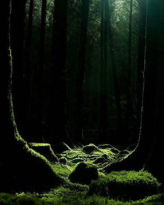 Στο δάσος είχε ησυχία. Υπερβολική ησυχία για τα γούστα μου. Υπάρχει ένα απλό κόλπο για να βρεις κάποιον να συζητήσεις. Αρχίζεις για πολιτικά. Όλο και κάποιος θα πεταχτεί να διαφωνήσει. -Έχω βάλει δέκα κιλά από τότε που βγήκε ΣΥΡΙΖΑ.  Συνέχισα στο μονοπάτι. Δεν δούλεψε η πρώτη προσπάθεια. -Ο Τσίπρας είναι ο μεγαλύτερος μαλάκας στον κόσμο. Πως είσαι σίγουρος; Άκουγα την φωνή αλλά δεν έβλεπα ακόμα τον Ελληνάρα που μου απάντησε οπότε προσέθεσα: -Γιατί έχει μια χώρα πανέμορφη και γαμάει την…