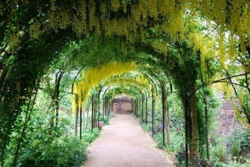 イギリス王立植物園、キューガーデンで撮られた一枚。植物のトンネル。