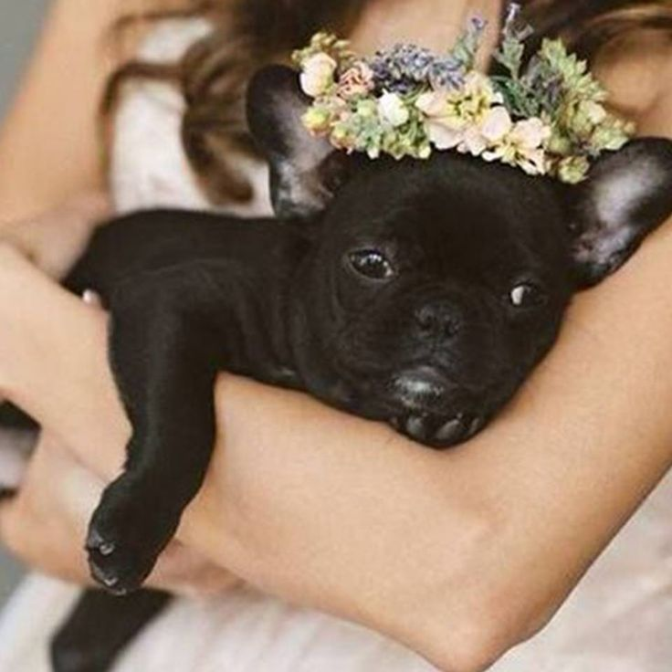 Have you ever seen something so adorable as this dog dressed up for a wedding? 🌸 We are in love! ❤ Do you have a special pet you would bring to your wedding? 🌸