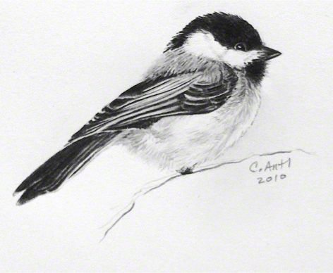 chickadee tattoo - Google Search