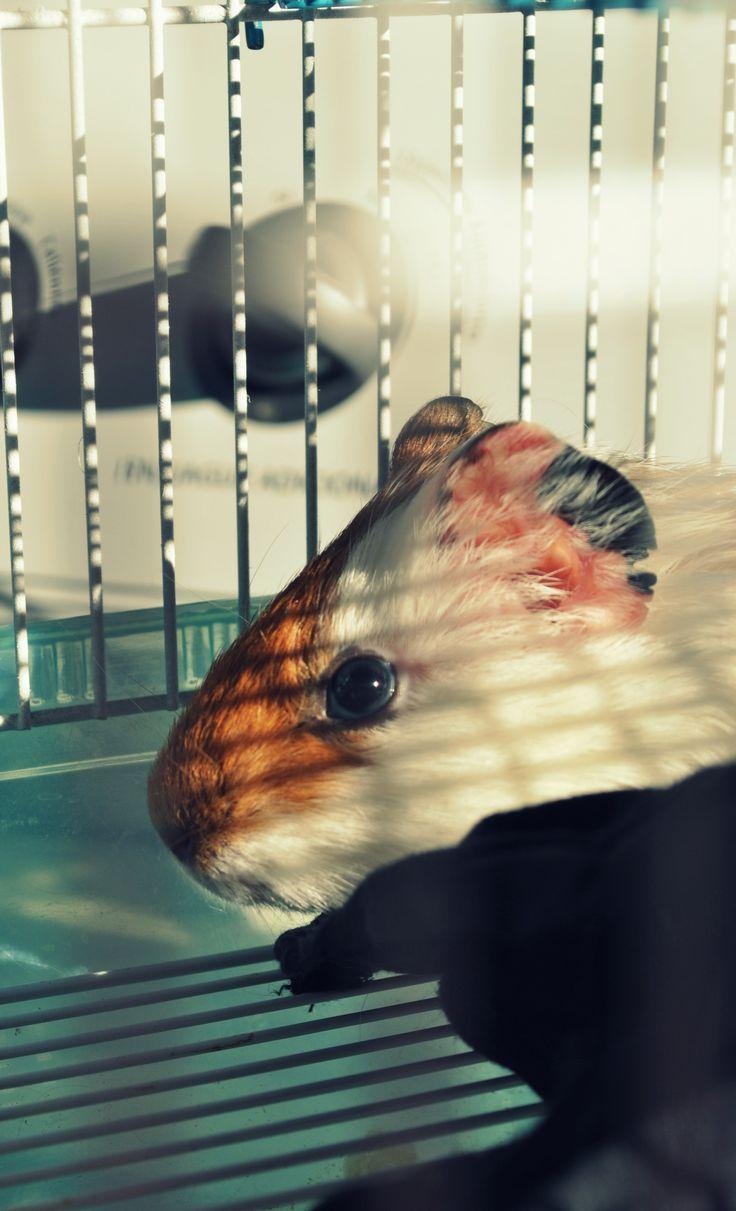 conejillo de india (anouk)