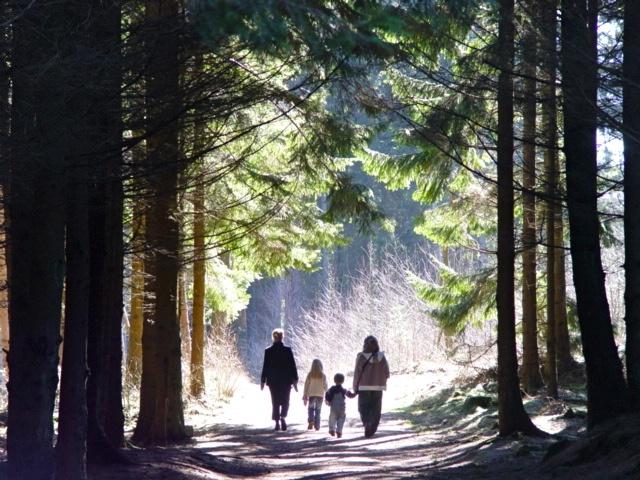 Forest Light.Bornholm