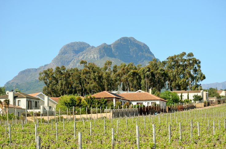Vredenzicht in Somerset West, Cape Town - Helderberg Mountain as backdrop. #SomersetWest #CapeTown