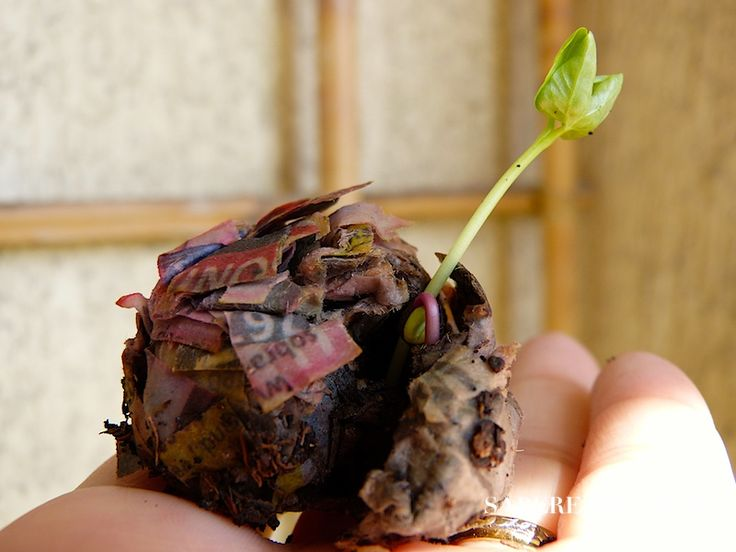 Aprenda a fazer bomba de sementes com jornal