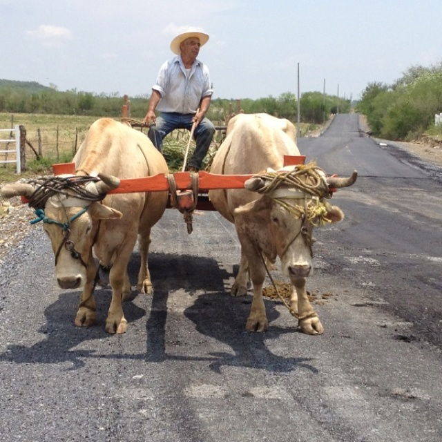 Describe tu pin... Tractor Rural: Describ Tu, Tractors Rural, Tu Pin