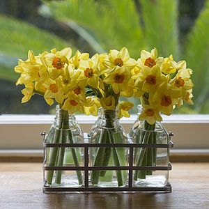 Scented Narcissus Flower Bottles - flowers & plants