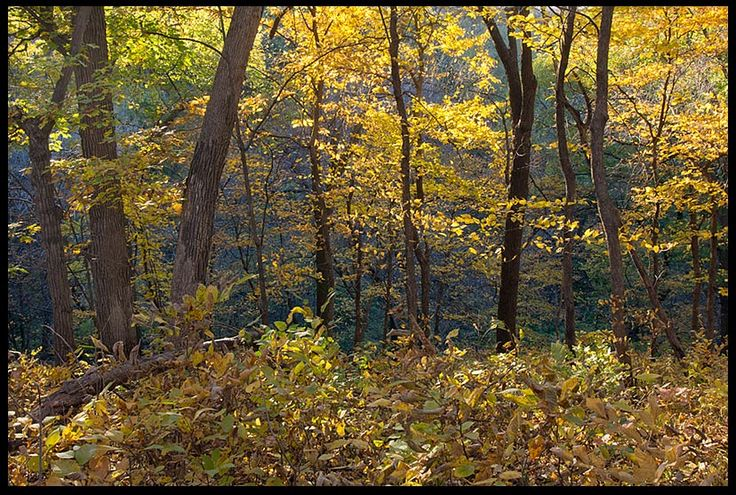 "Visual #BibleVerseoftheDay: Fall Trees, Fontenelle Forest, Bellevue, Nebraska and Psalm 26:8. ""That I may proclaim with the voice of thanksgiving and declare all Your wonders. O LORD, I love the habitation…"" CLICK THE PHOTO for the complete passage. http://visualverse.thecreationspeaks.com/all-your-wonders/"