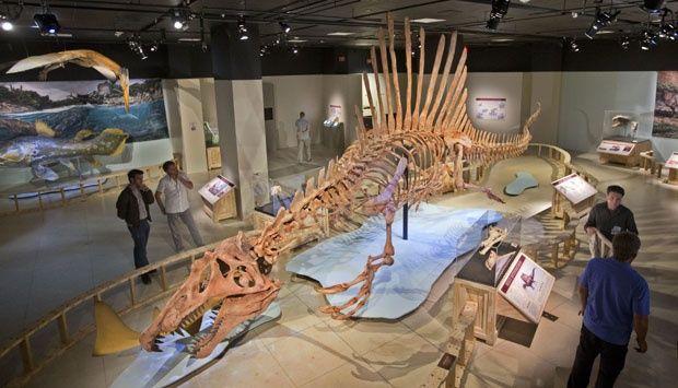 Melihat Fosil Spinosaurus, Dinosaurus Terbesar di Dunia