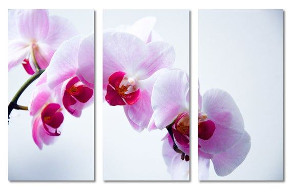 Pink White Orchid Canvas Print Flower Wall Art 3 Panel Split