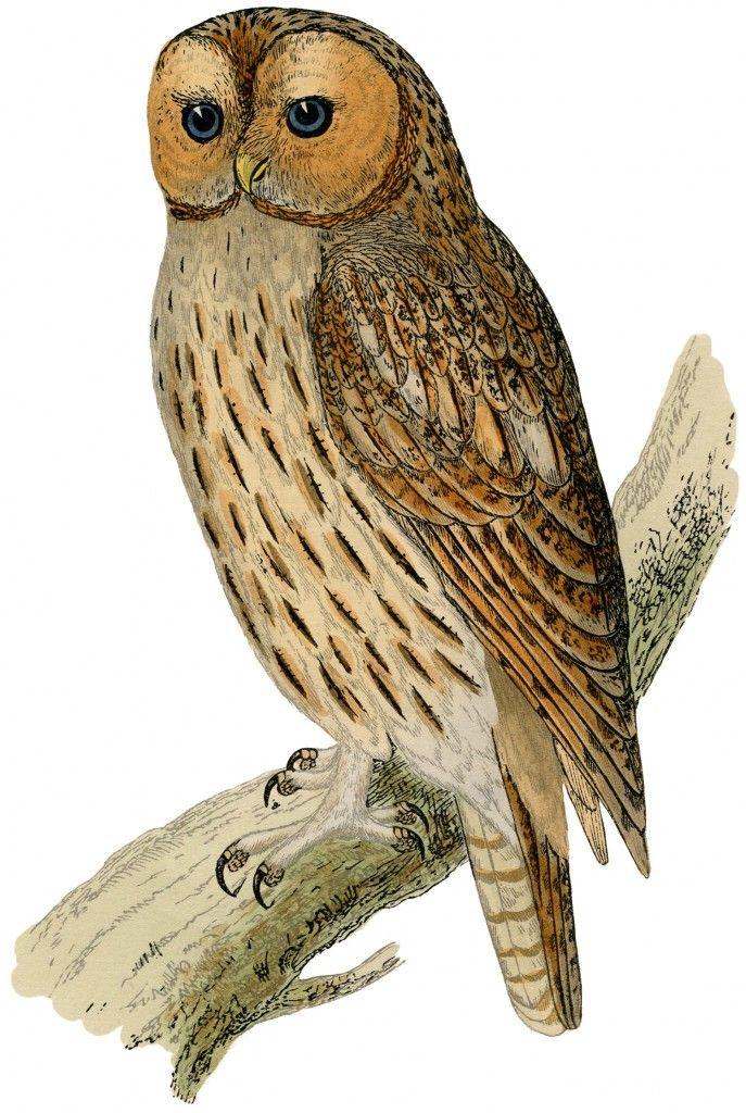 Vintage Printable Owl
