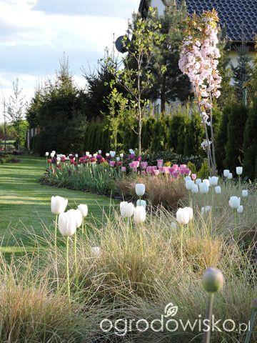 Zielonej ogrodniczki marzenie o zielonym ogrodzie - strona 669 - Forum ogrodnicze - Ogrodowisko
