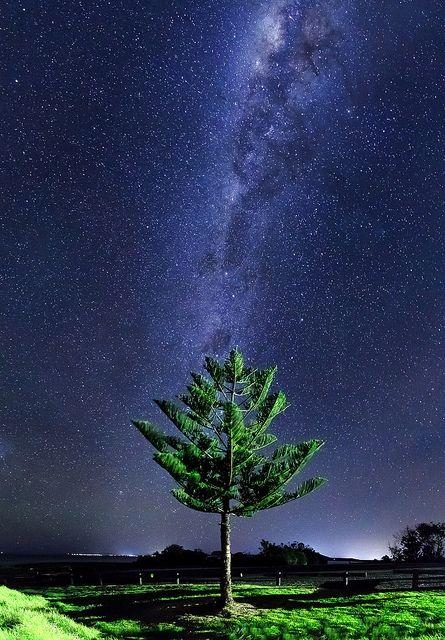 Milky Way Tree, Gerringong, New South Wales, Australia