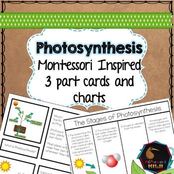 This Montessori inspired pack helps your children learn about the importance of Photosynthesis and how it happens. It includes 5x 3 part style montessori cards that answer questions about Photosynthesis e.g. What is Photosynthesis? What do plants need to make food?