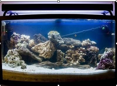 how to add water to aquarium