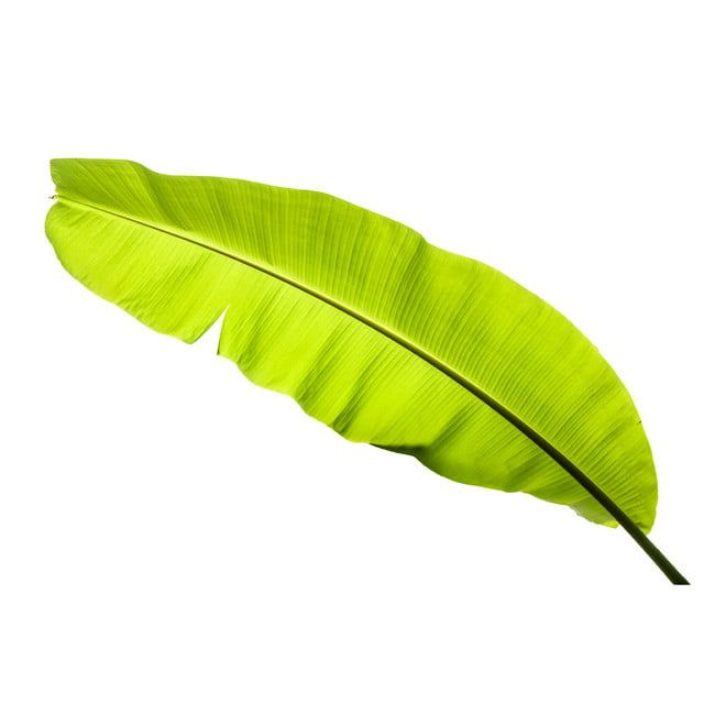 Banana Leaf Leaf Clipart Background Banana Png Transparent Clipart Image And Psd File For Free Download