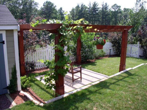 Grape Vines Growing Over Pergola My Cousins And I Are